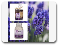 vign1_Set_Lavanda_all
